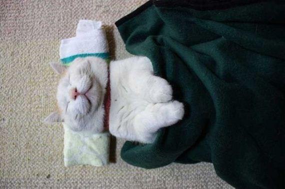 گربه خواب